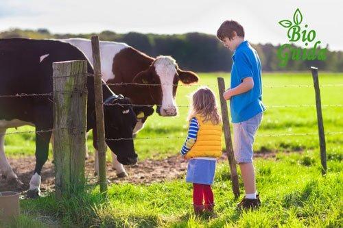 I benefici del cibo biologico per i bambini