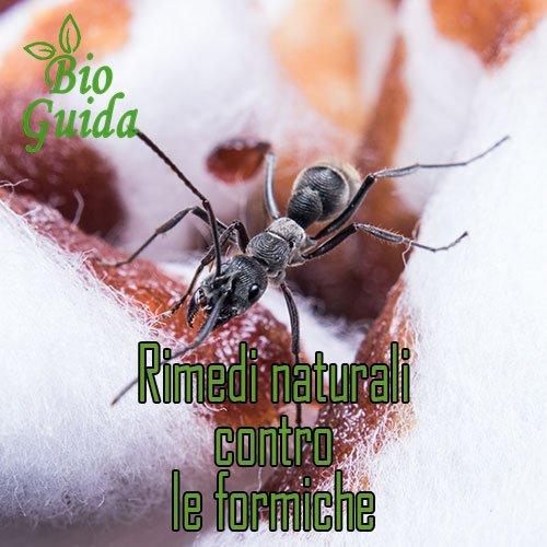 rimedi naturali contro le formiche