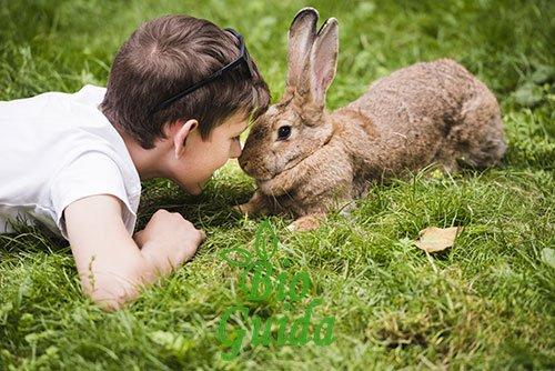 Bimbo gioca con un coniglio in una fattoria didattica