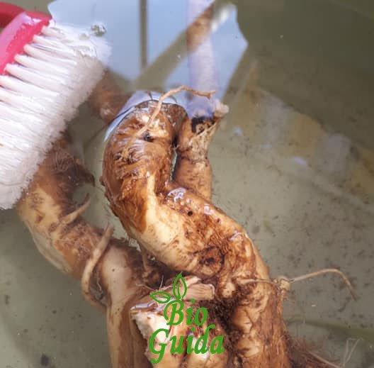 Lavare la radice del rafano